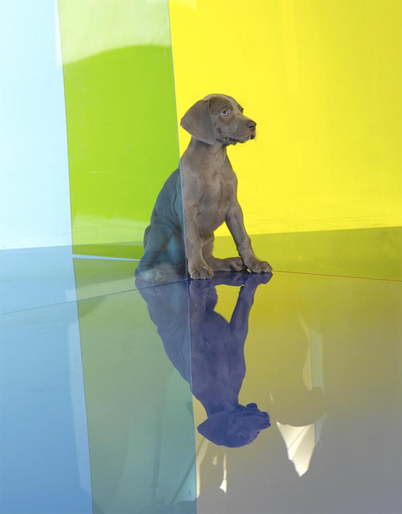 William Wegman - Planar, 2008, pigment print, 14 by 11 inches
