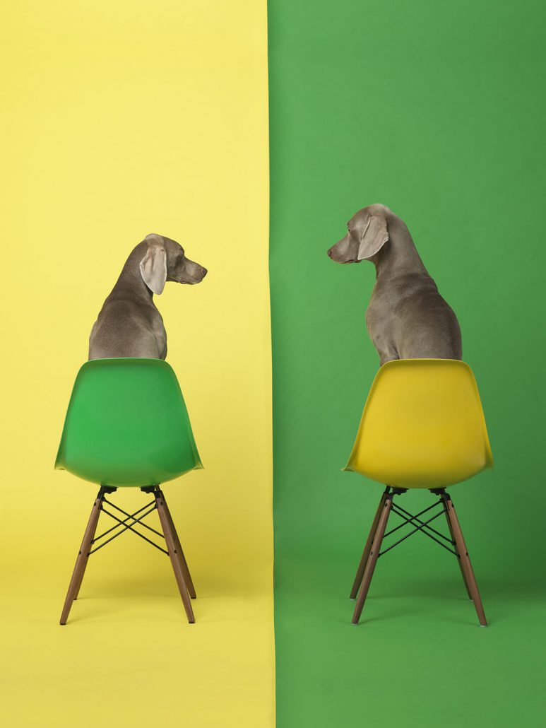 William Wegman - Yellow Two Green, 2015, pigment print, 30 by 24 inches or 44 by 34 inches