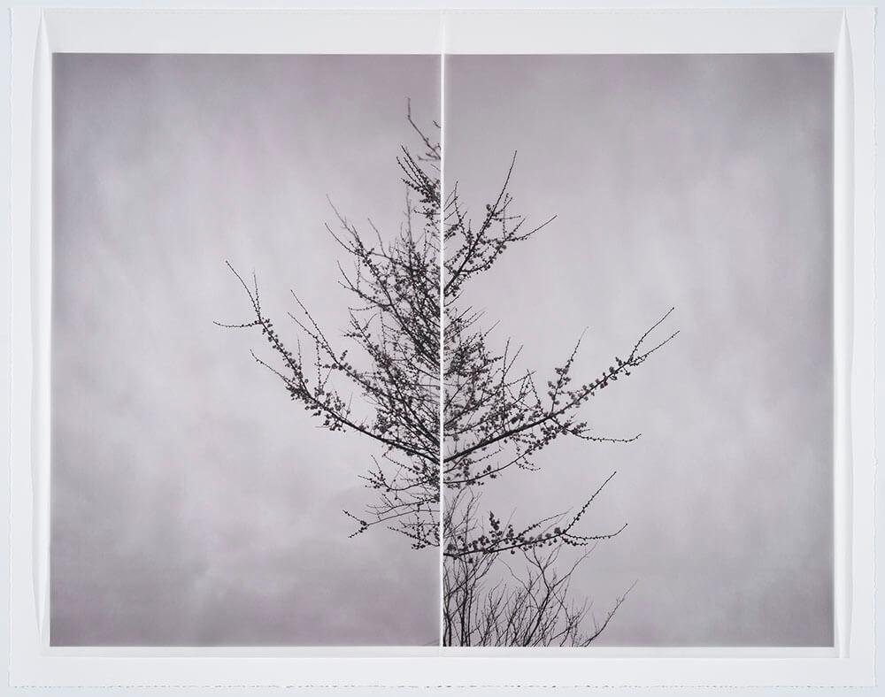 Marie Navarre - season of longing, 2016, rag paper, digital rag paper, digital vellum, silk thread, 36.5 by 46.25 inches framed