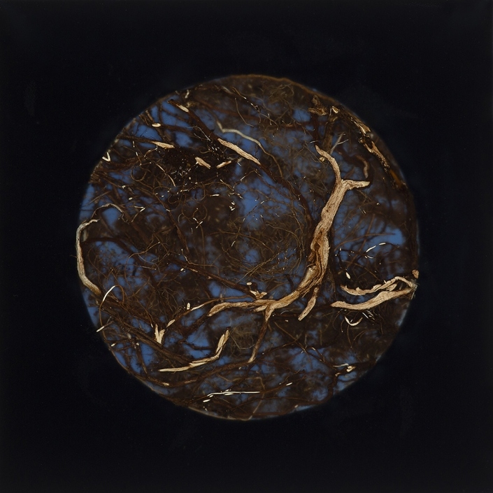 Mayme Kratz - Root Moon (SOLD), 2018, resin, Snakeweed, rabbit brush roots on panel, 12 by 12 inches