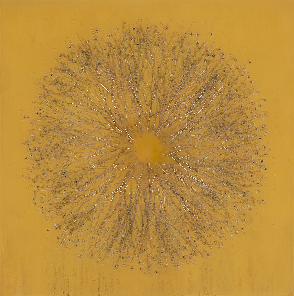 Mayme Kratz - Vanishing Light 8 (SOLD), 2018, resin, Dysodia bush on panel, 40 by 40 inches