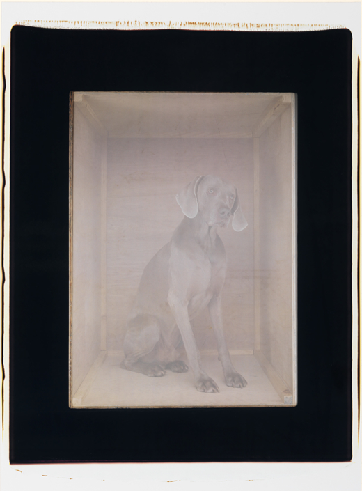 William Wegman - To Kyoto, 2003, color polaroid, 24 by 20 inches