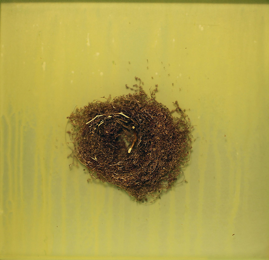 Mayme Kratz - Knot 340 (SOLD), 2019, resin and grass on panel, 12 x 12 inches