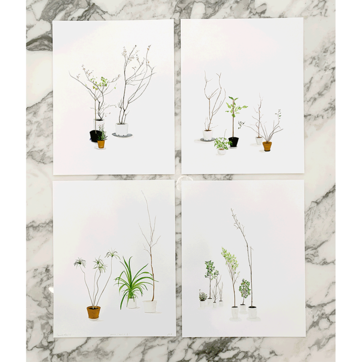 Carrie Marill - House Plants, 2020, pigment prints, 14 x 11 inches (each), edition of 10, $1,600 unframed (suite of 4)