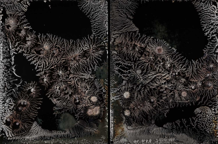 Michael Koerner - DNA #8918L - #8922R, 2019, collodion on tin, 2 plates: 8 by 6 inches each plate, 8 by 12 inches overall