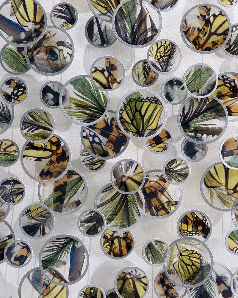 Alan Bur Johnson - a flock, a swarm (detail), 2020, photographic transparencies, metal frames, dissection pins, 93.5 x 39 x 2 inches