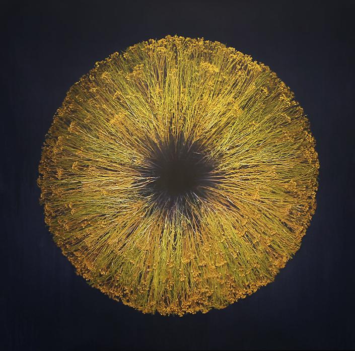 "Mayme Kratz - Vanishing Light 23 (SOLD), 2021, resin and Broom Snake Weed, 36"" x 36"""